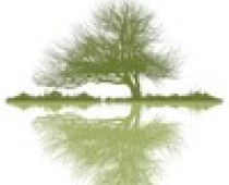 cropped-tree-with-reflection-for-biz-cards-from-vista.jpg
