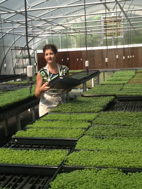 Lucky Leaf Microgreens Growing in Harrisburg, NC